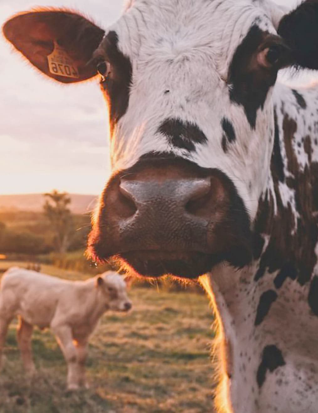 Are you treating your customers more like cattle?